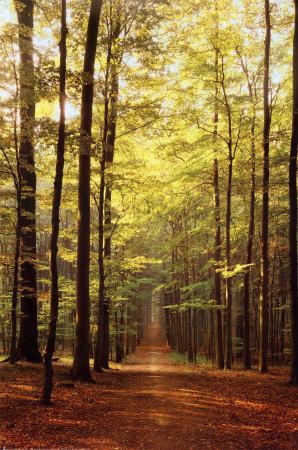 Chemin-dans-la-foret